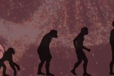 Slothino blog - evolution of the sloth