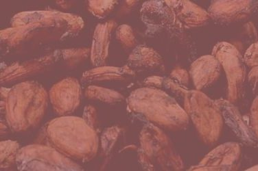 blog.slothino.com Cocoa Beans and the Rainforest
