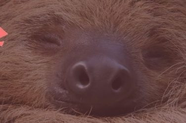 slothino blog sloths adapting to change post