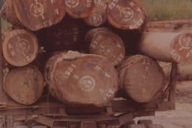 Slothino blog tropical timber