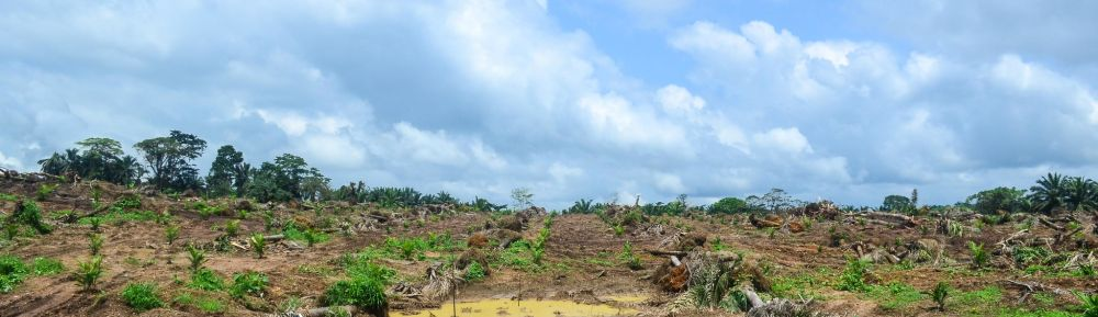 Slothino blog story of deforestation and rainforest protection in Nigeria